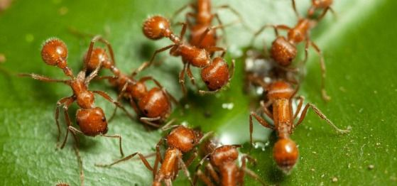 Remove Ant Infestations With These Tips