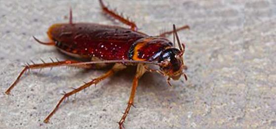 Hilton Head Island Pest Control