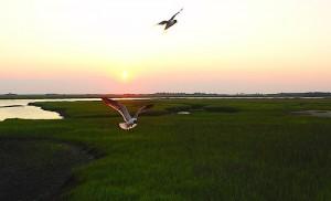 Pest Control Fripp Island