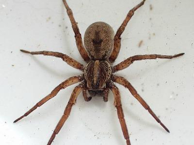 Spider treatment Hilton head