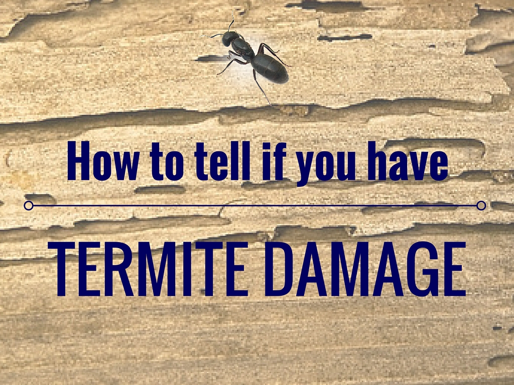 How To Tell If You Have Termite Damage Island Pest Control