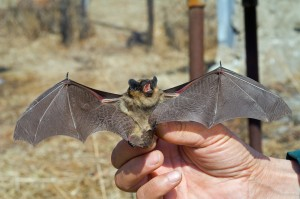 A close up of the small bat in human hand.