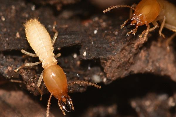 Hilton Head Exterminators