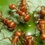 Understanding the Serious Problem of Fire Ants