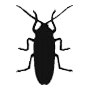 bed-bug-control-icon