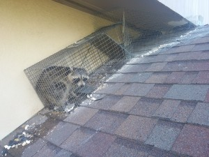 rodent removal hilton head sc