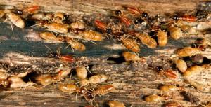 termite spray