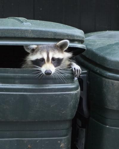 Nuisance Animal Removal