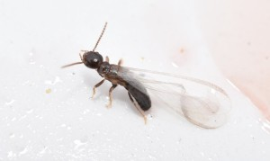 Termites exterminator