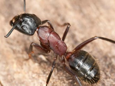 Get Rid of Your Ants Before they Swarm