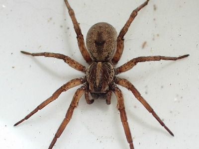 Wolf Spiders Can Pack a Nasty Bite for You and Your Pets