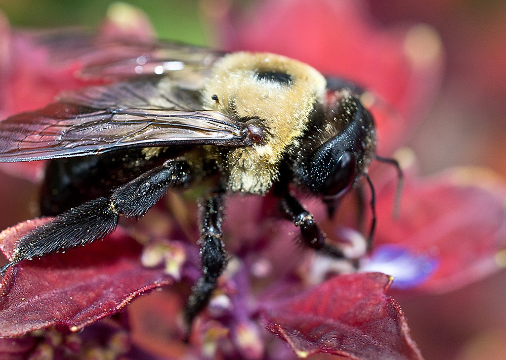 What South Carolina Home Owners Need to Know About Carpenter Bees