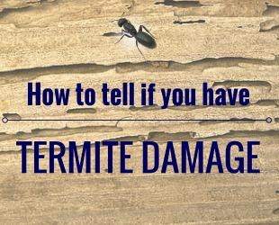 termites on hilton head
