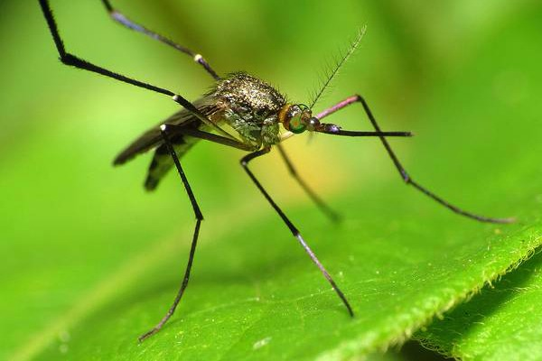 Mosquitoes, Ticks, and Fleas Carry Diseases in South Carolina