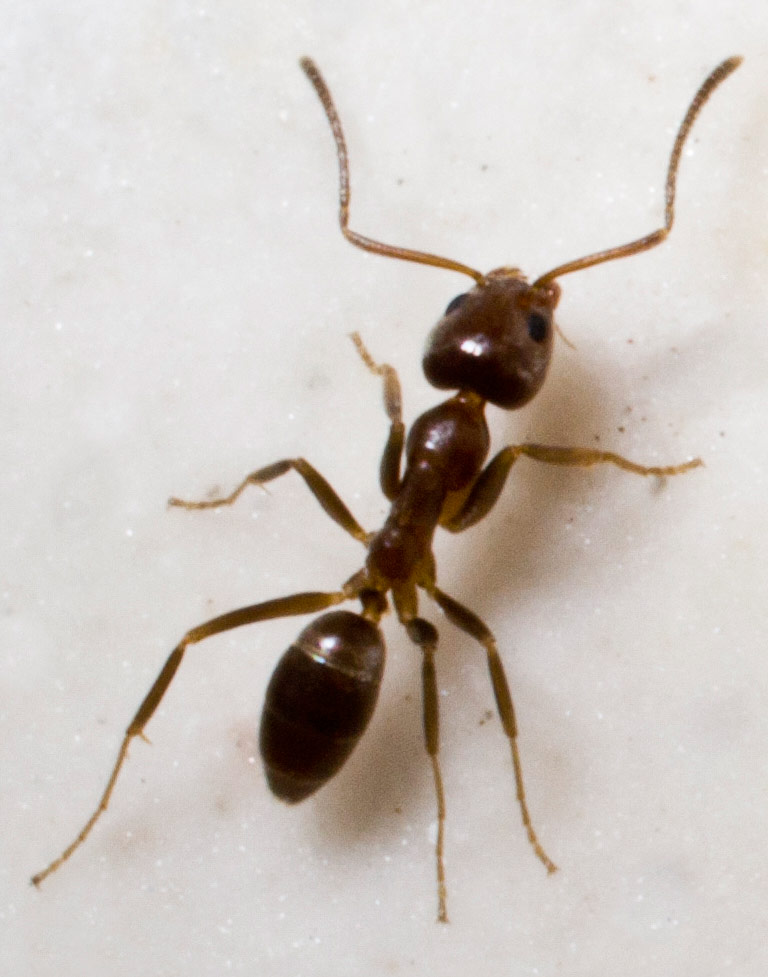 Picture of an ant.