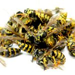 What to Know About Hilton Head, SC Yellowjackets