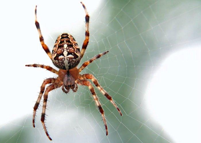 Spider Control Bluffton SC